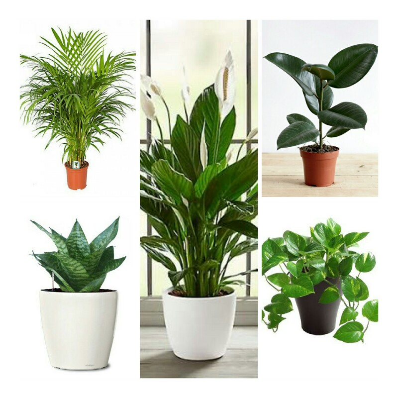 TOP 5 Air purifier and oxygen enriching plant pack best ...